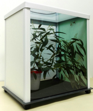 TTQ cage with insects inside